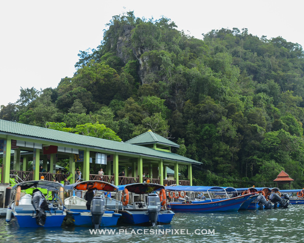 mangrove tour in Langkawi